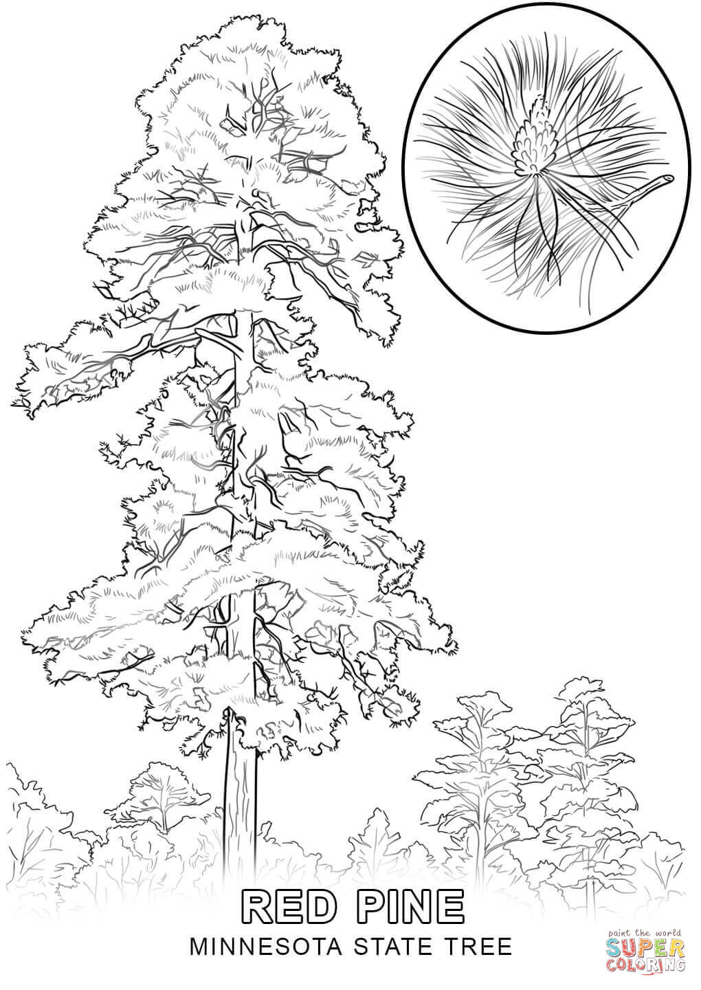 pencil drawings of pine trees pine tree drawing tall pine tree silhouette image vector of pencil trees pine drawings
