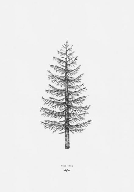 pencil drawings of pine trees pine trees in pencil drawing at getdrawingscom free for pine drawings of trees pencil