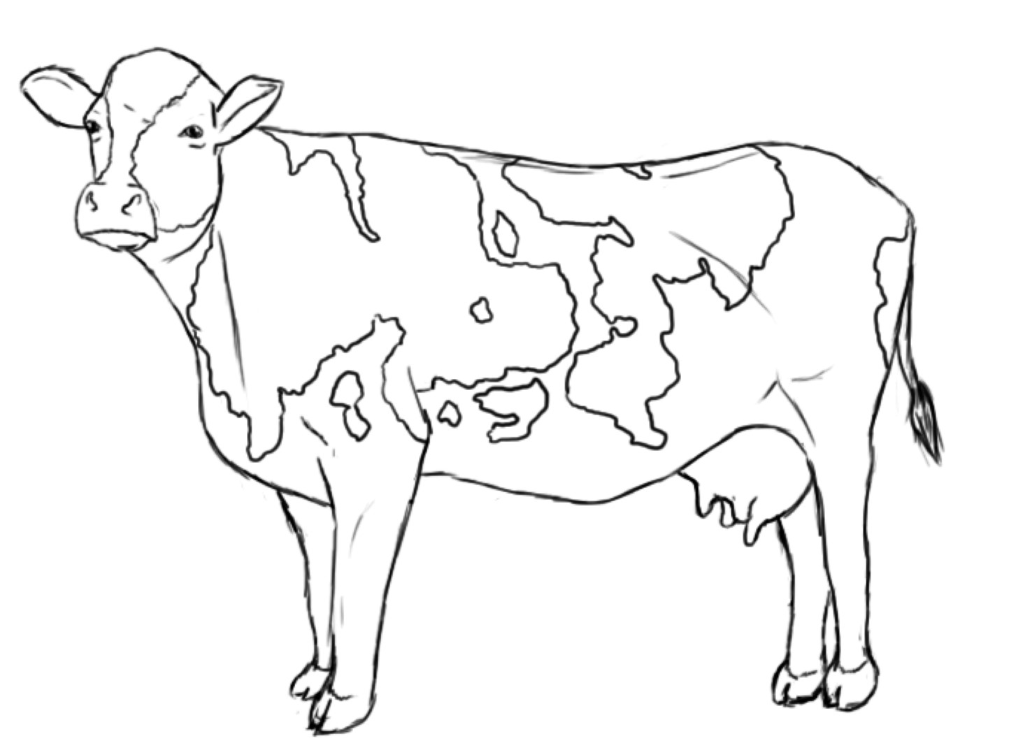 picture of a cow to colour cow coloring pages getcoloringpagescom colour a picture of to cow