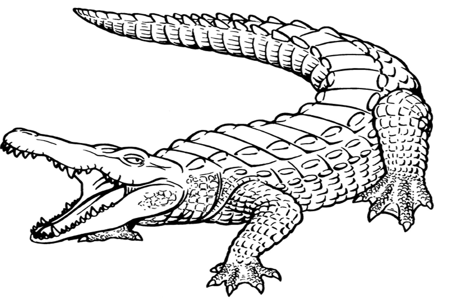 picture of a crocodile to colour free printable crocodile coloring pages for kids colour crocodile to a of picture