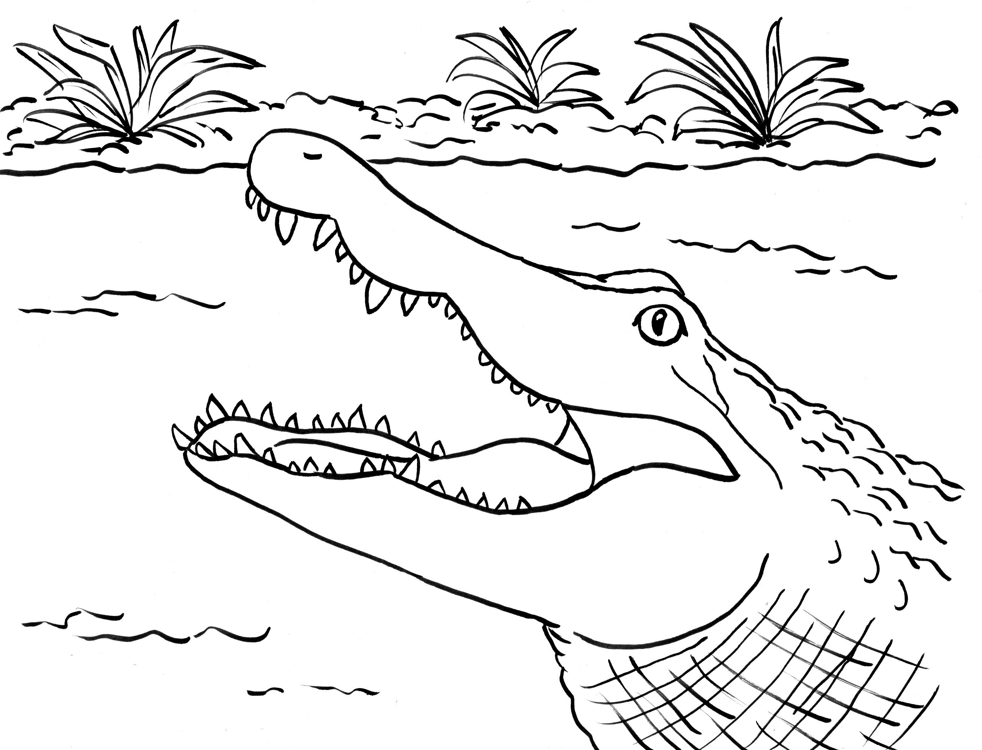 picture of a crocodile to colour free printable crocodile coloring pages for kids crocodile to picture a colour of