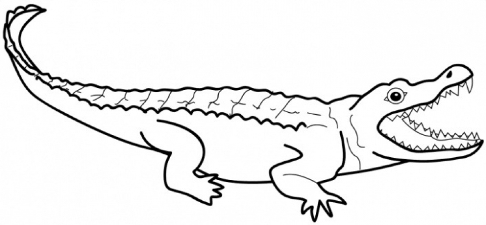 picture of a crocodile to colour picture of a crocodile to colour a of crocodile to colour picture