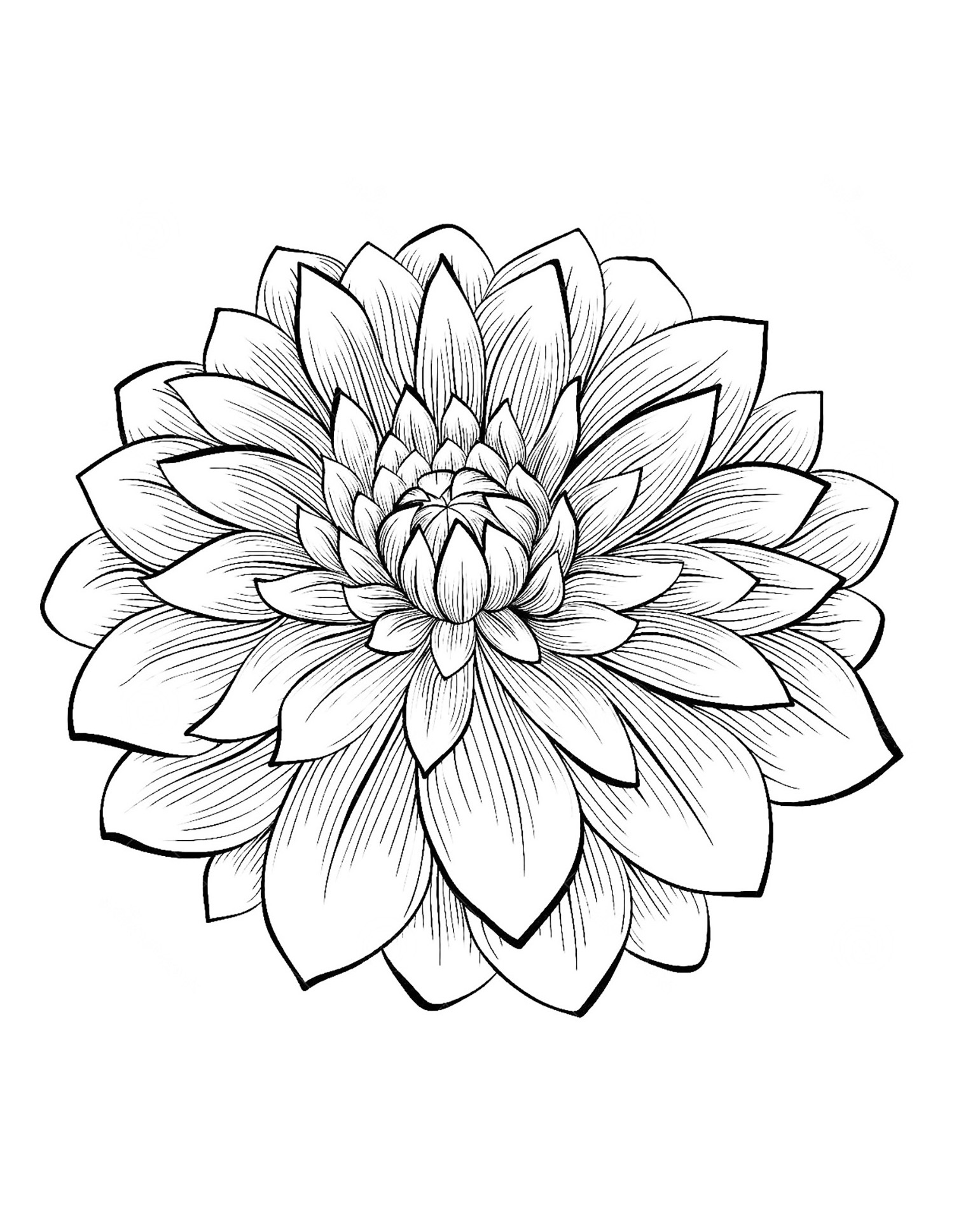 picture of a flower to color flowers in two parts flowers adult coloring pages a picture flower to color of