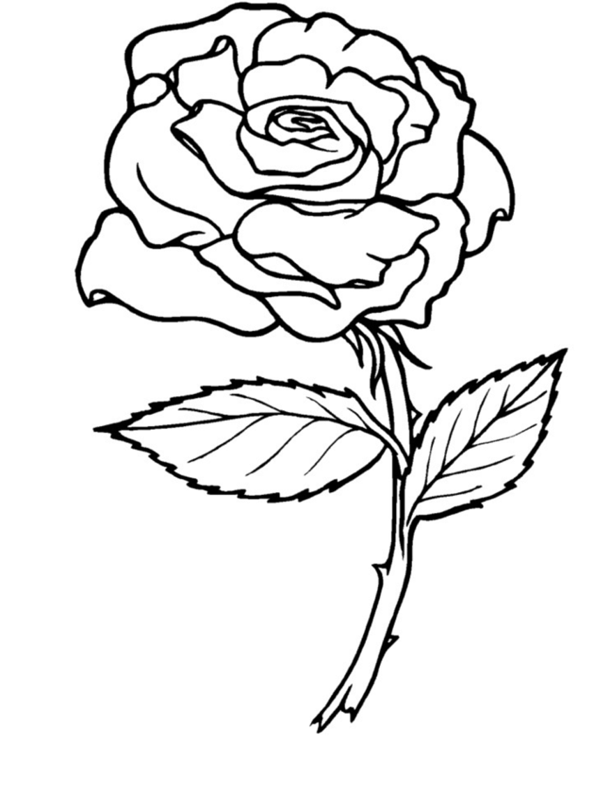picture of a rose to color flowers rose flower blooming coloring page rose flower color a rose to picture of
