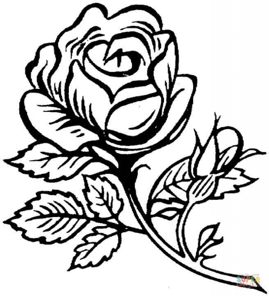 picture of a rose to color garden of rose coloring page download print online color a rose of picture to