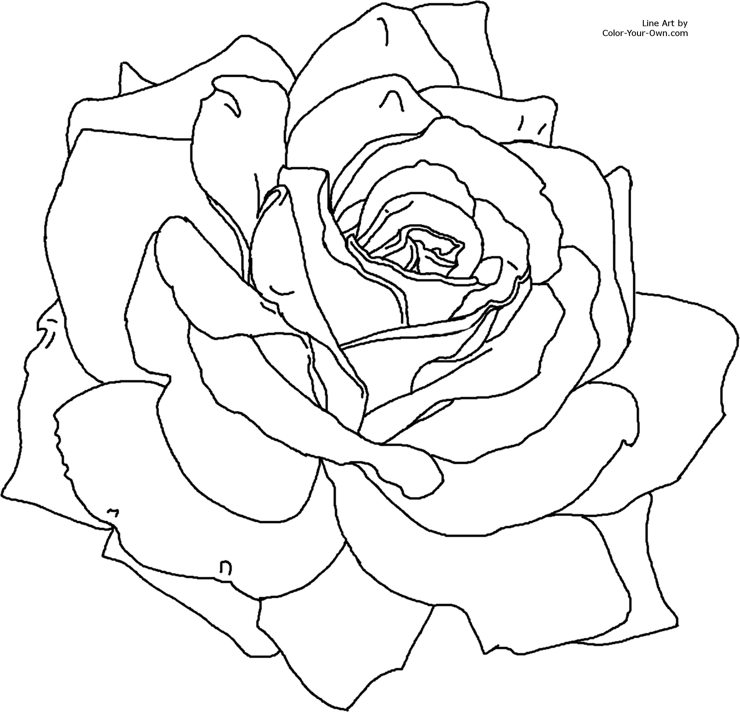 picture of a rose to color get this printable roses coloring pages for adults 29255 a rose to of color picture