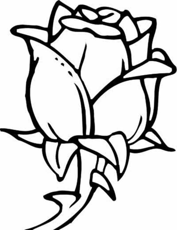 picture of a rose to color rose flower coloring page a color picture rose to of