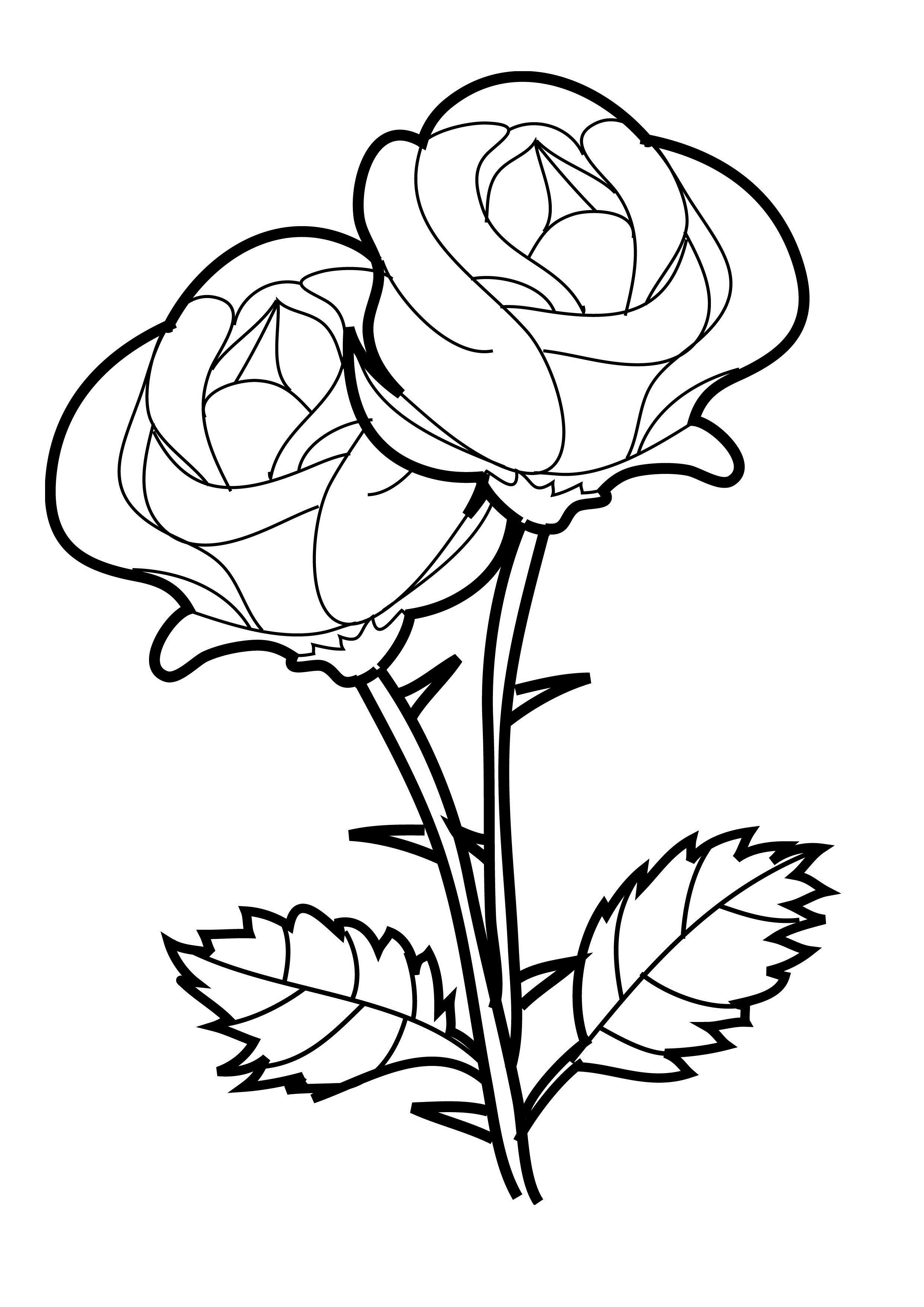 Picture of a rose to color