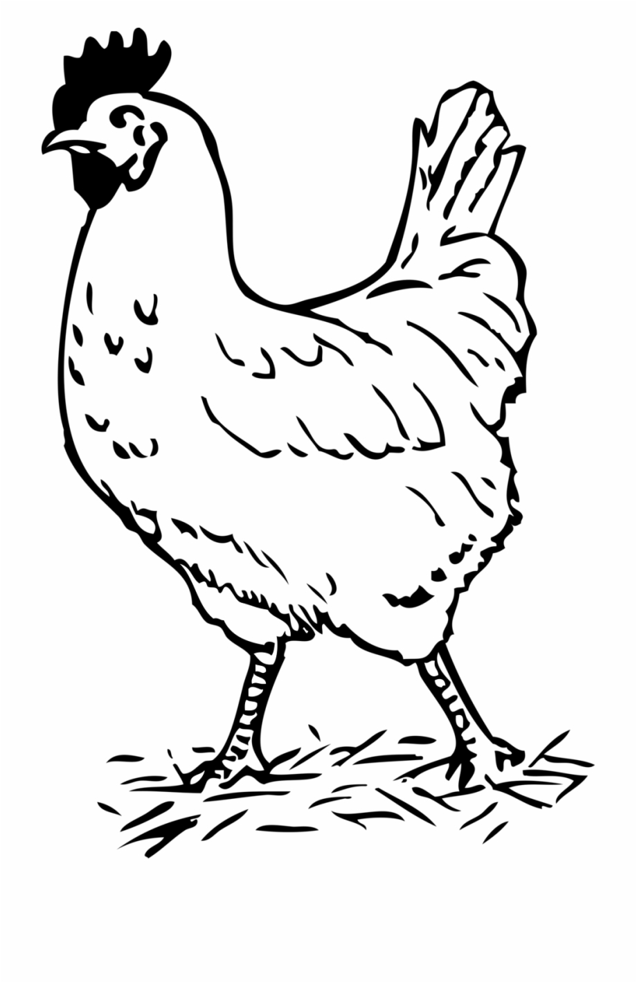 picture of chicken a history of chickens then 1900 vs now 2016 chicken of picture
