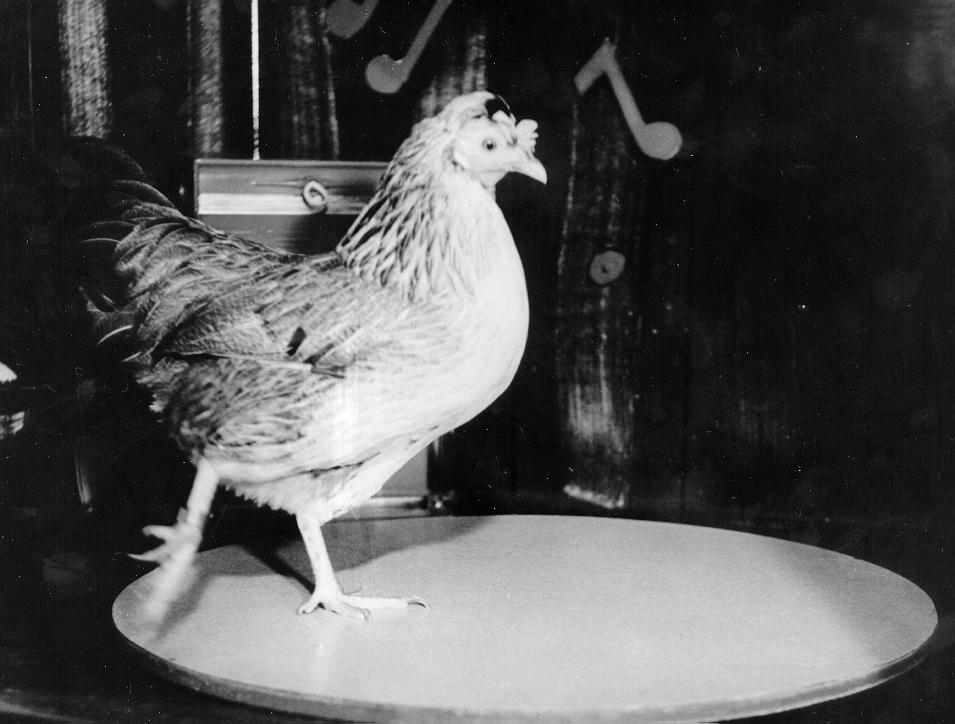 Picture of chicken