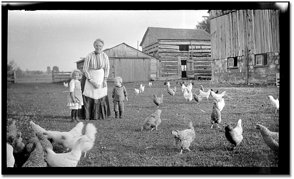 picture of chicken the true story of mike the headless chicken scienceblogs chicken picture of