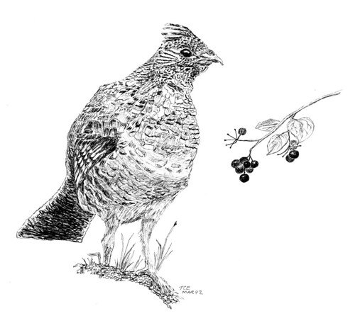 Picture of pennsylvania state bird