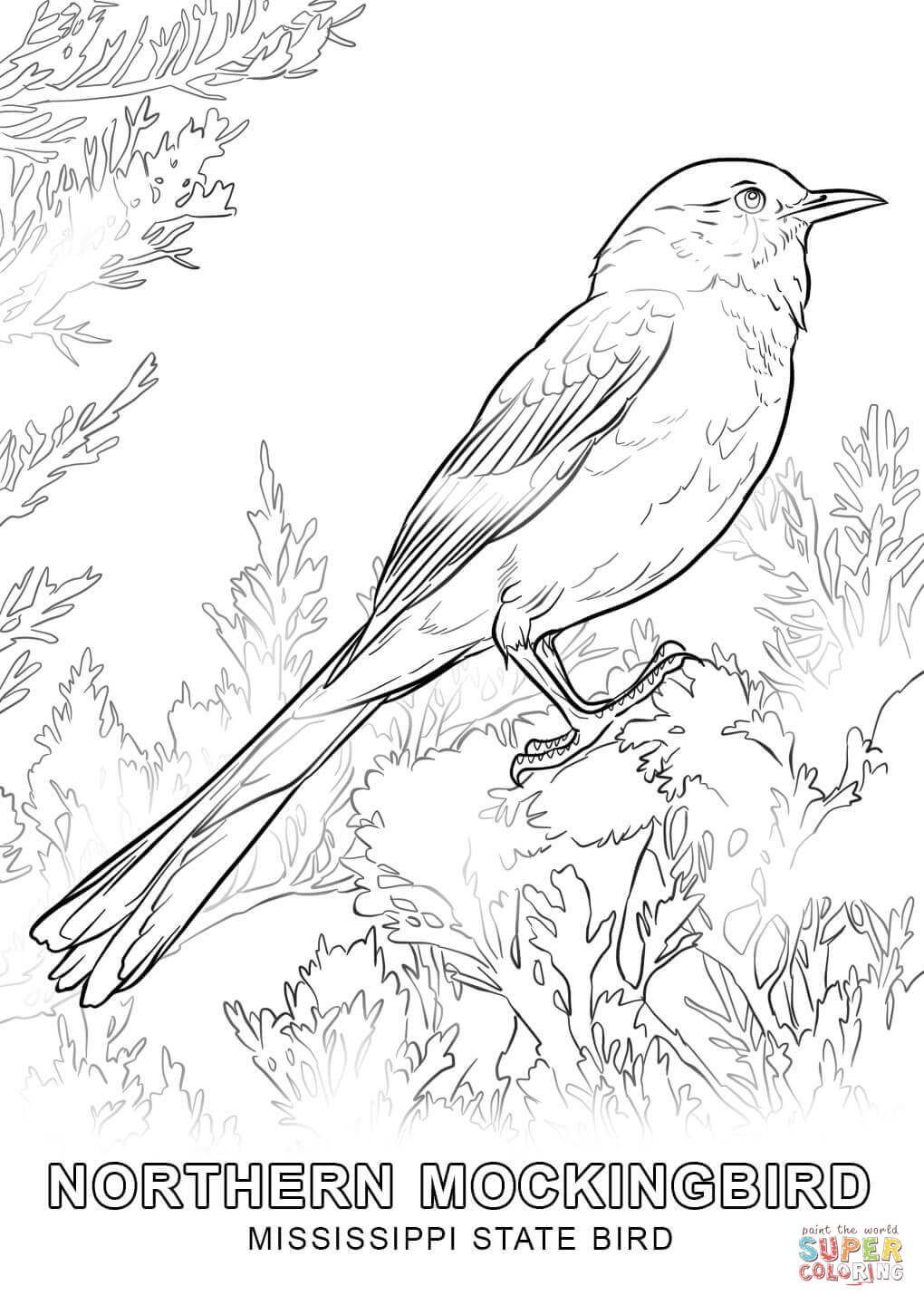 picture of pennsylvania state bird the best free mississippi drawing images download from 80 pennsylvania of state picture bird