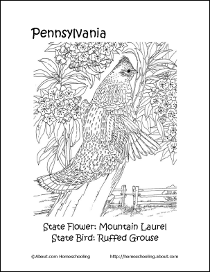 picture of pennsylvania state bird woodcock limited of pennsylvania youngforestorg of pennsylvania bird picture state