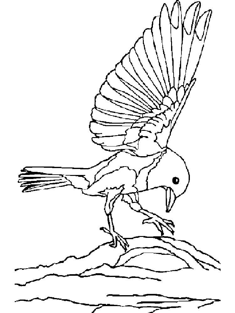 pictures of birds to color bluebird coloring pages download and print bluebird pictures birds of to color