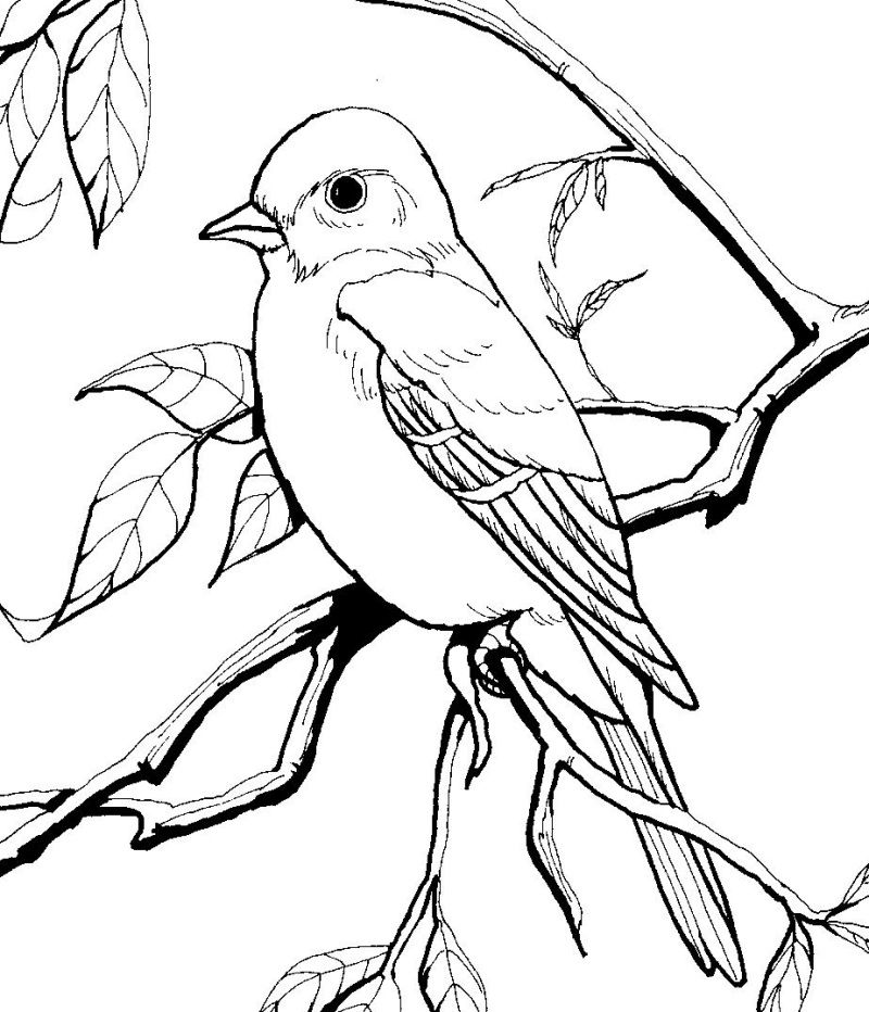 pictures of birds to color coloring pages of pictures birds to color