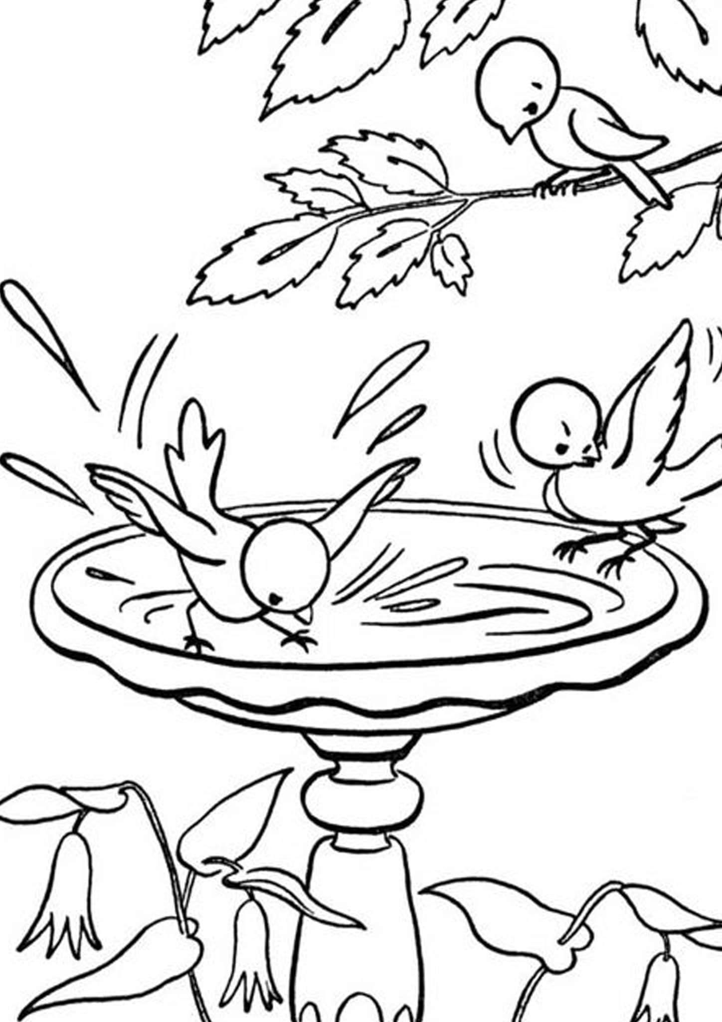 pictures of birds to color hummingbird coloring pages with images bird coloring of color pictures birds to
