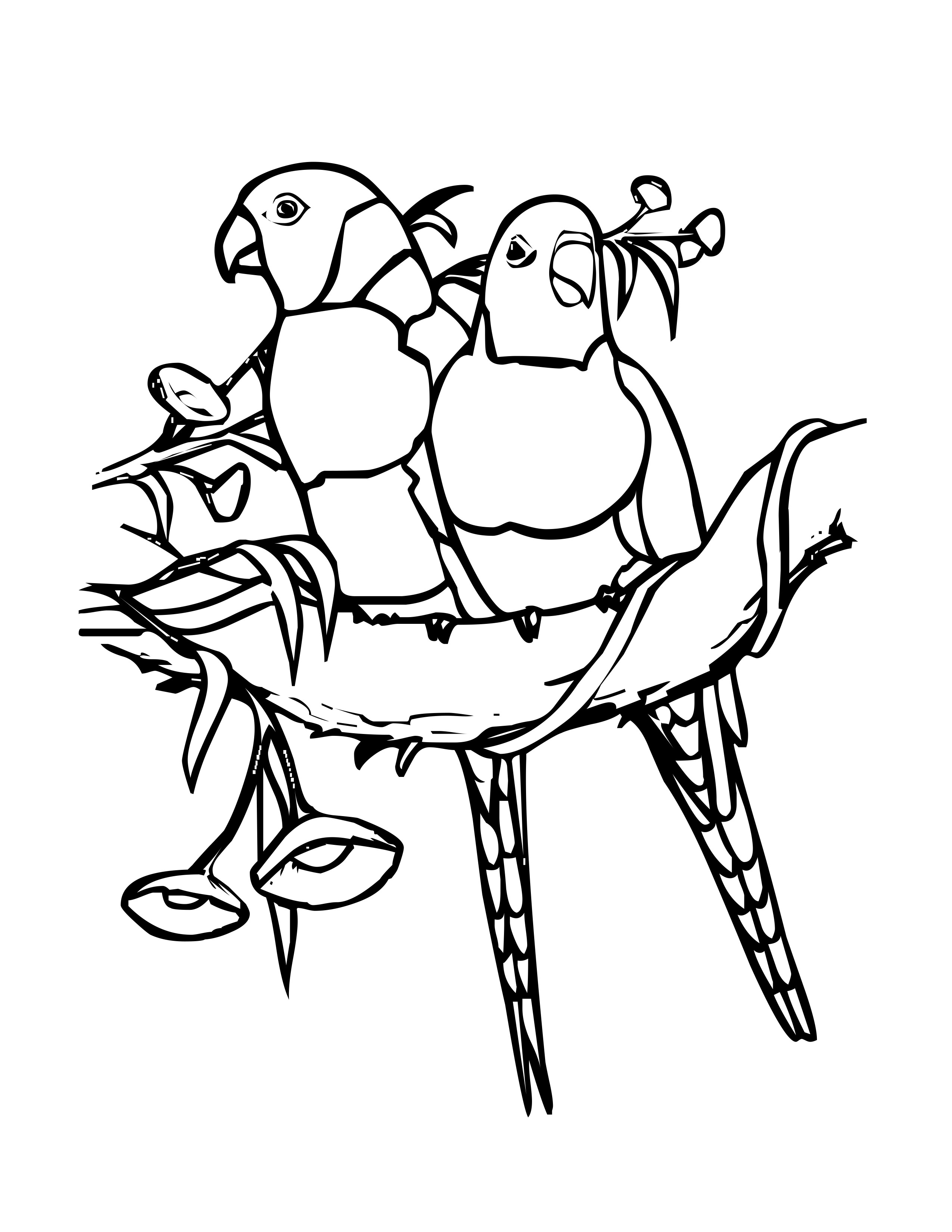 pictures of birds to color tweety bird coloring pages kidsuki color to of birds pictures