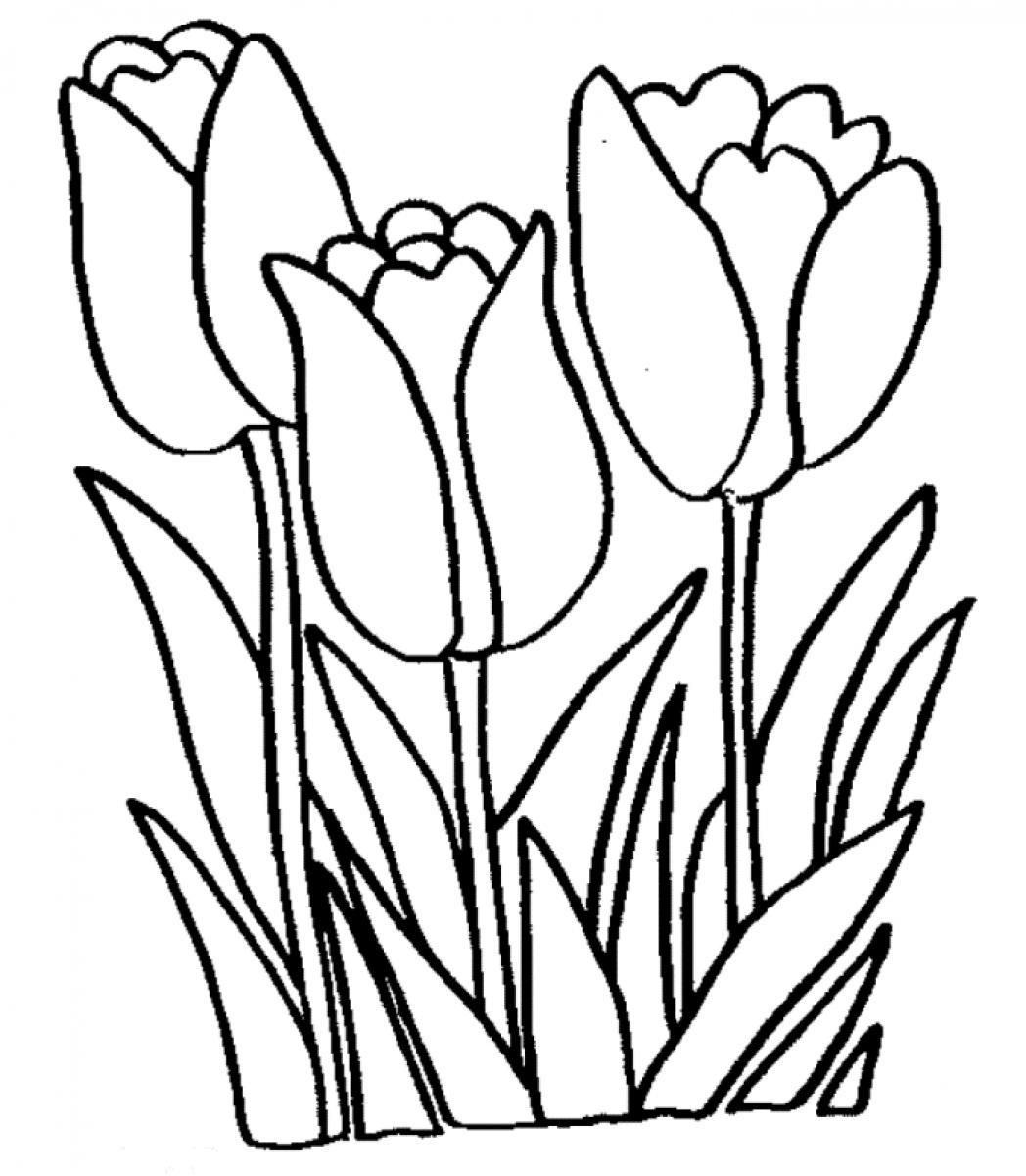 pictures of flowers to color tulip coloring pages to download and print for free flowers color pictures to of