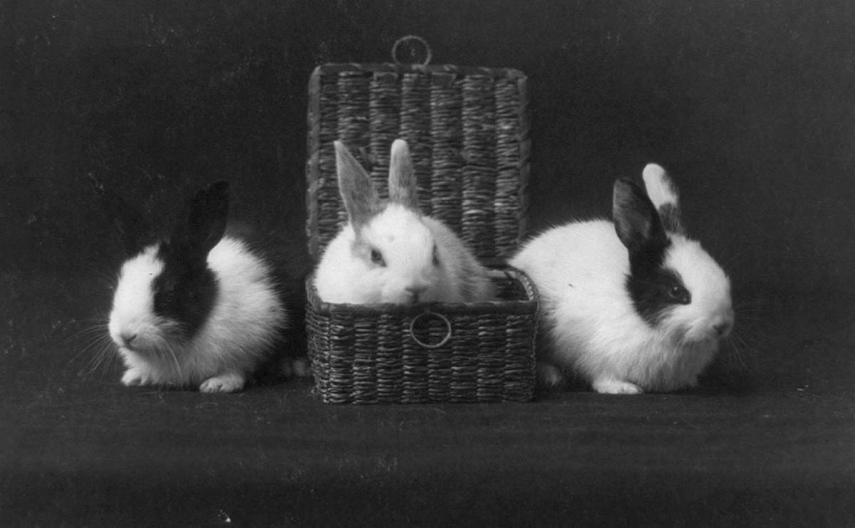 pictures of rabbits for kids 11 vintage photos of rascally rabbits modern farmer for pictures kids rabbits of