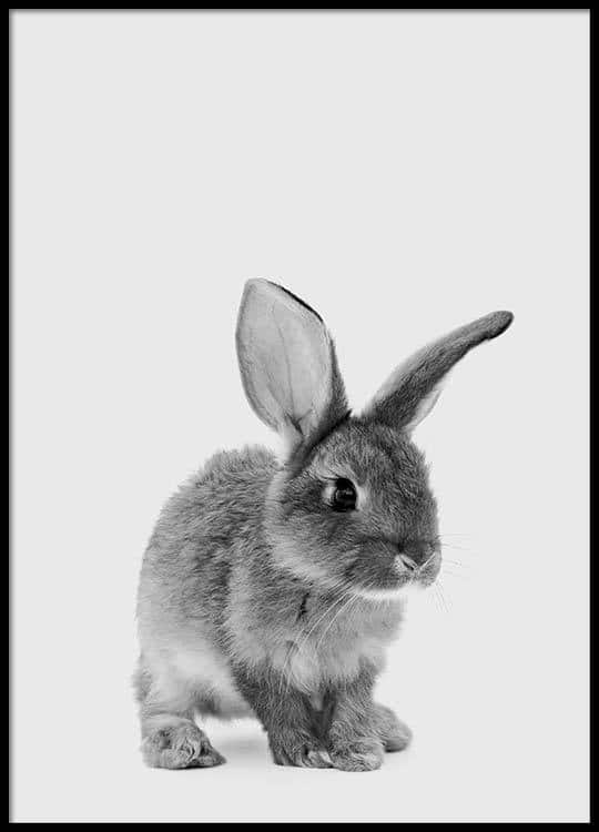 Pictures of rabbits for kids