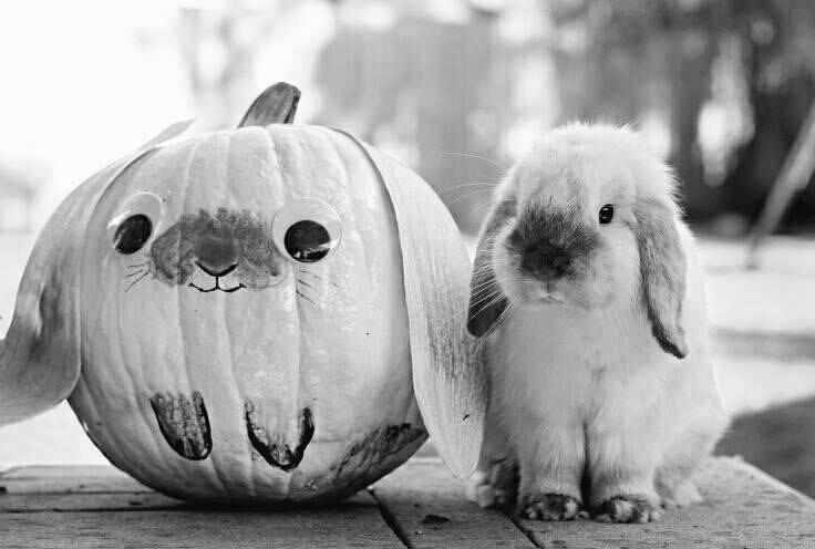 pictures of rabbits for kids bunny pumpkin pictures photos and images for facebook kids pictures for of rabbits