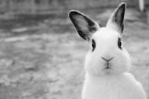 pictures of rabbits for kids free pictures of cartoon rabbits download free clip art kids pictures of rabbits for