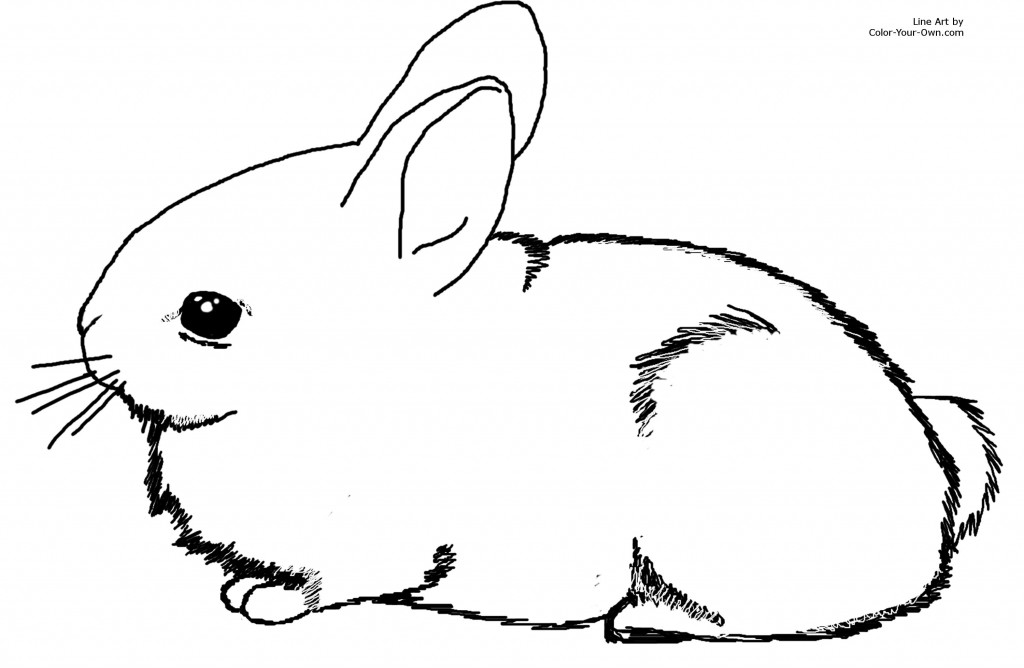pictures of rabbits for kids how to draw a bunny skip to my lou kids for rabbits of pictures