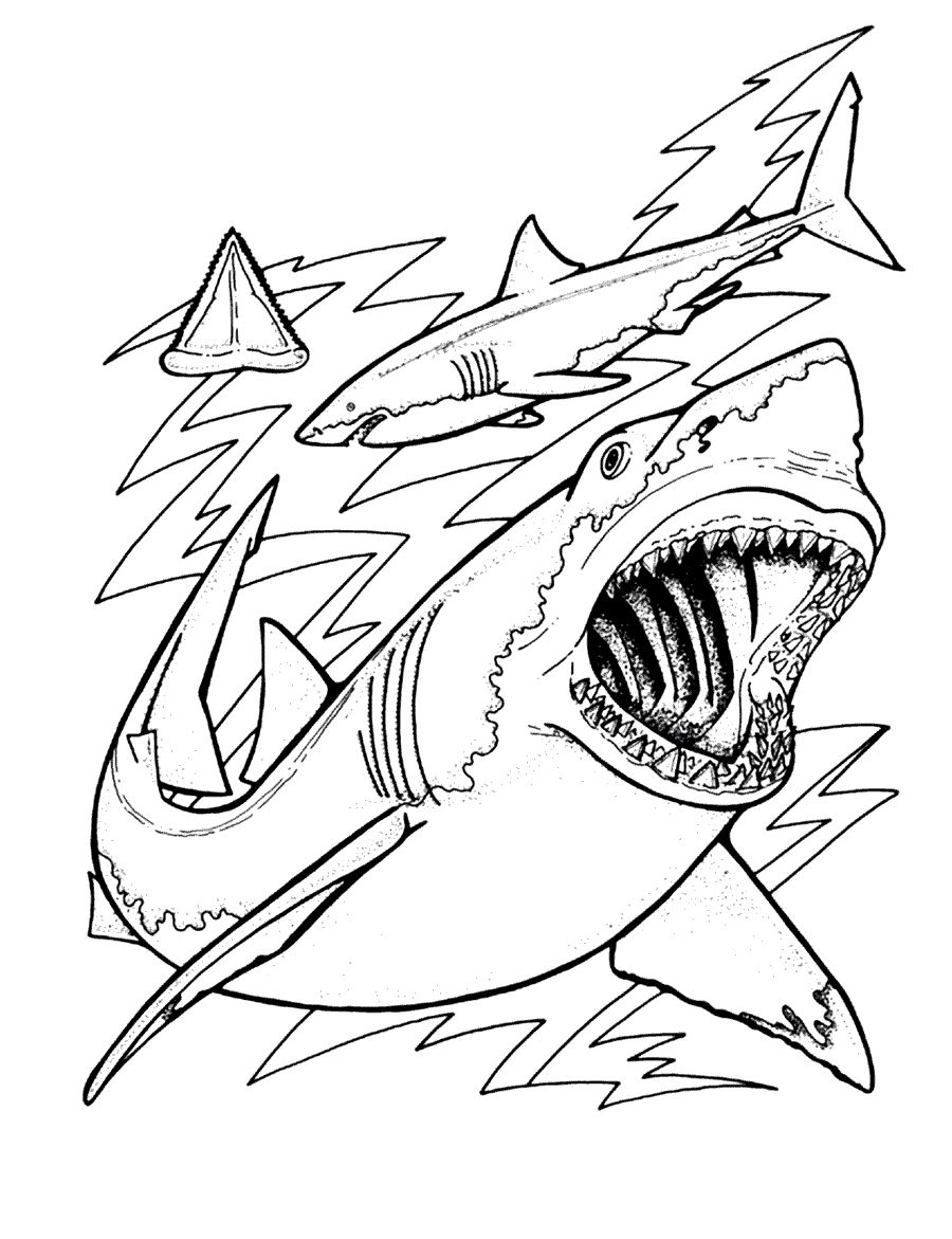 pictures of sharks to colour 55 shark shape templates crafts colouring pages free to sharks colour pictures of