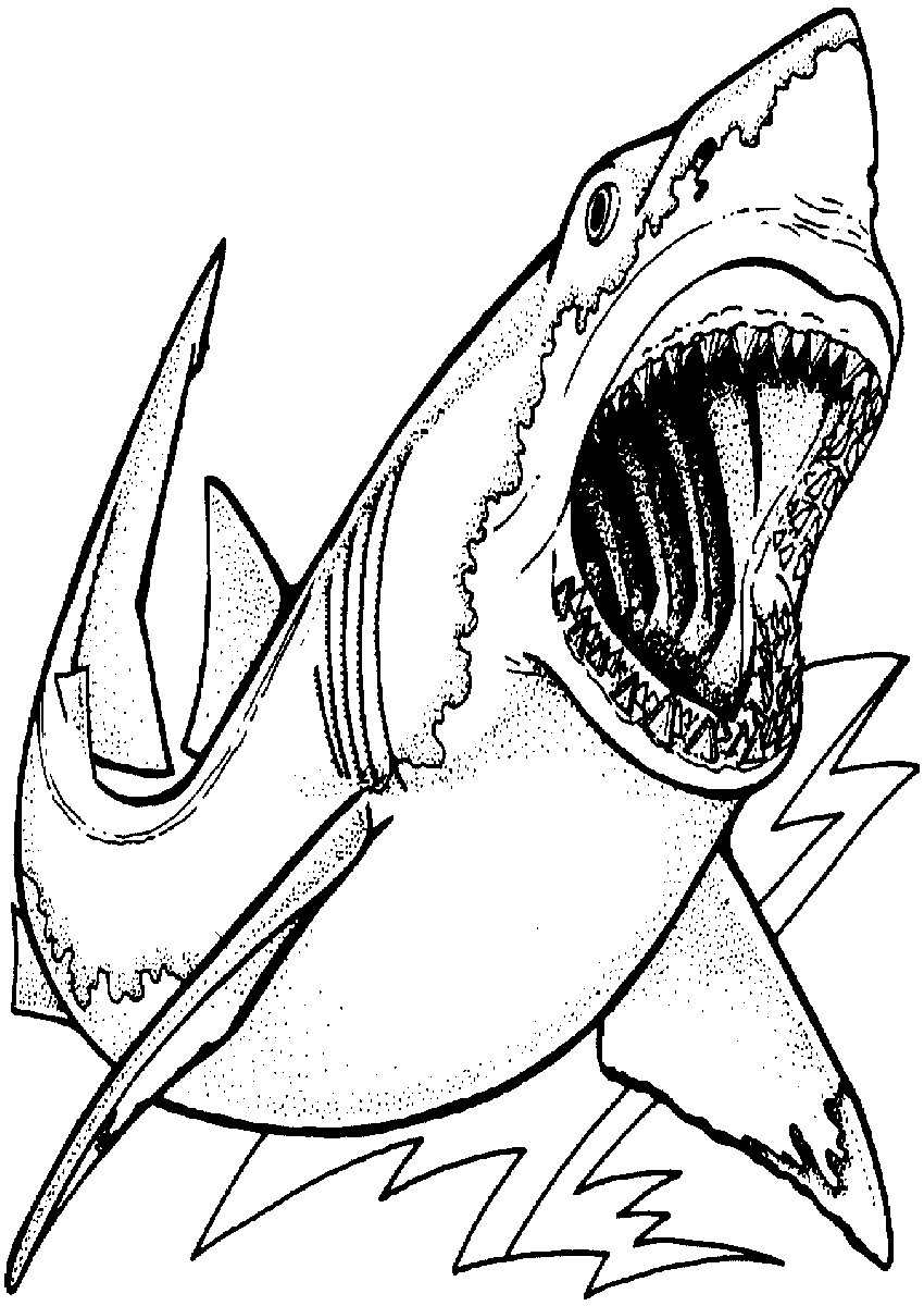 pictures of sharks to colour free shark coloring pages of colour to sharks pictures