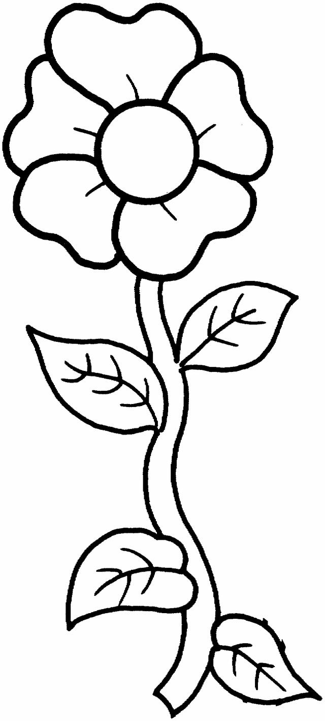 pictures to colour in of flowers free printable flower coloring pages for kids best flowers of pictures in colour to
