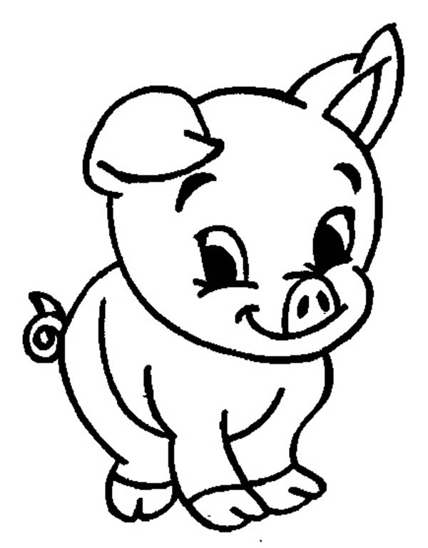 pig to colour cute pig coloring pages download free coloring sheets colour to pig