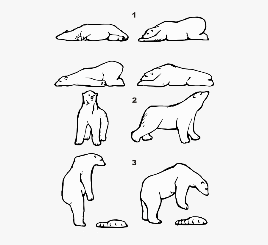 polar bear laying down picture from wikimedia ursus maritimus posture draw a bear laying polar down