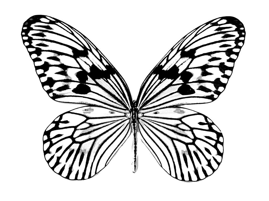 printable butterflies butterfly drawing to print at getdrawings free download butterflies printable 1 1