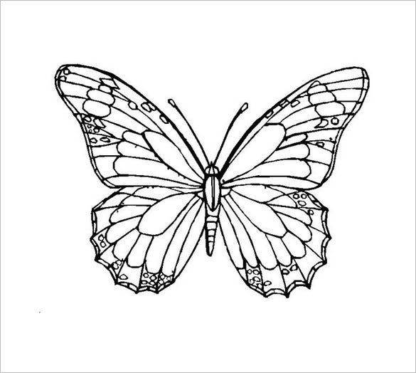 printable butterflies free printable butterfly coloring page ausdruckbare printable butterflies