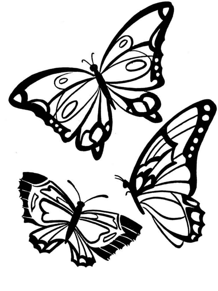 printable butterflies free printable butterfly coloring pages for kids butterflies printable