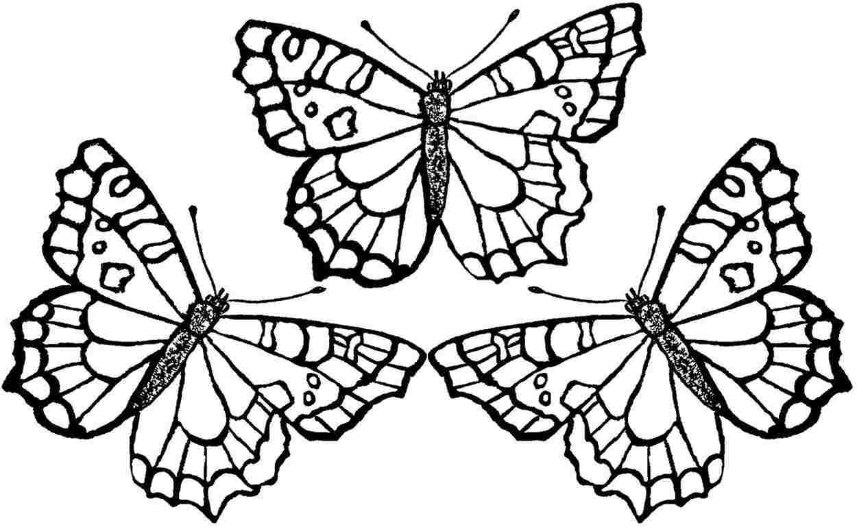 printable butterflies monarch butterfly coloring pages to print free coloring butterflies printable 1 1