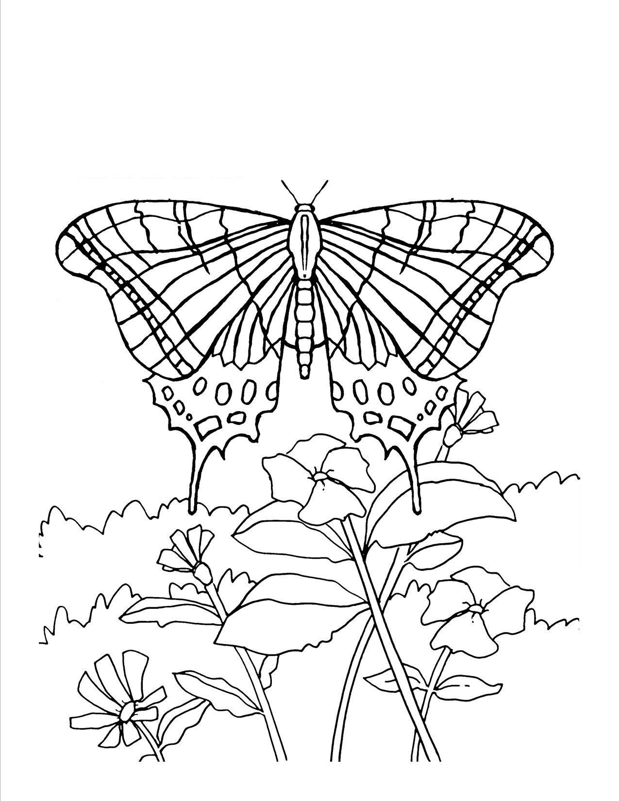 printable butterflies printable butterfly coloring pages for kids printable butterflies