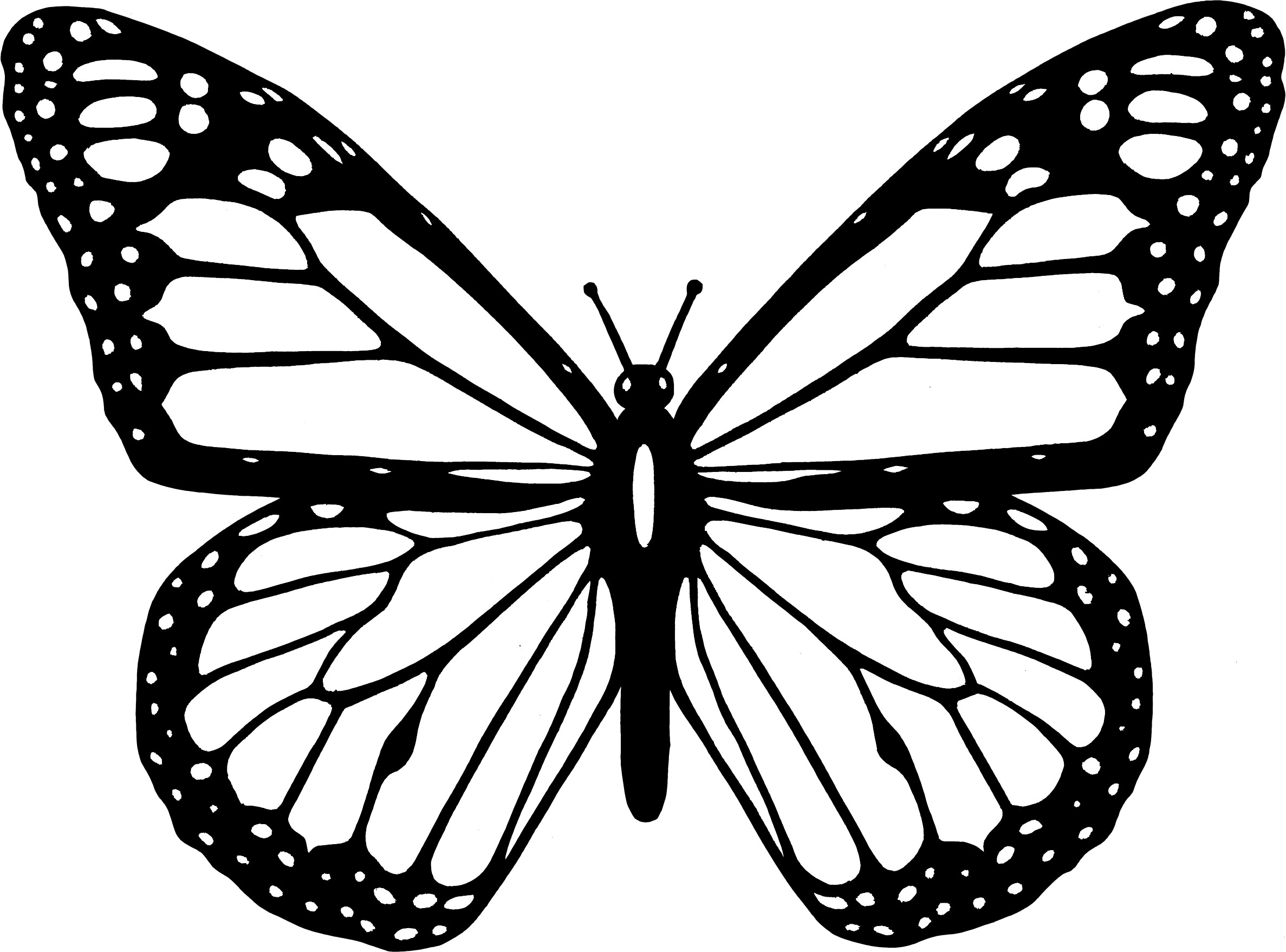 printable butterfly coloring page beautiful butterfly coloring pages at getdrawings free butterfly printable page coloring
