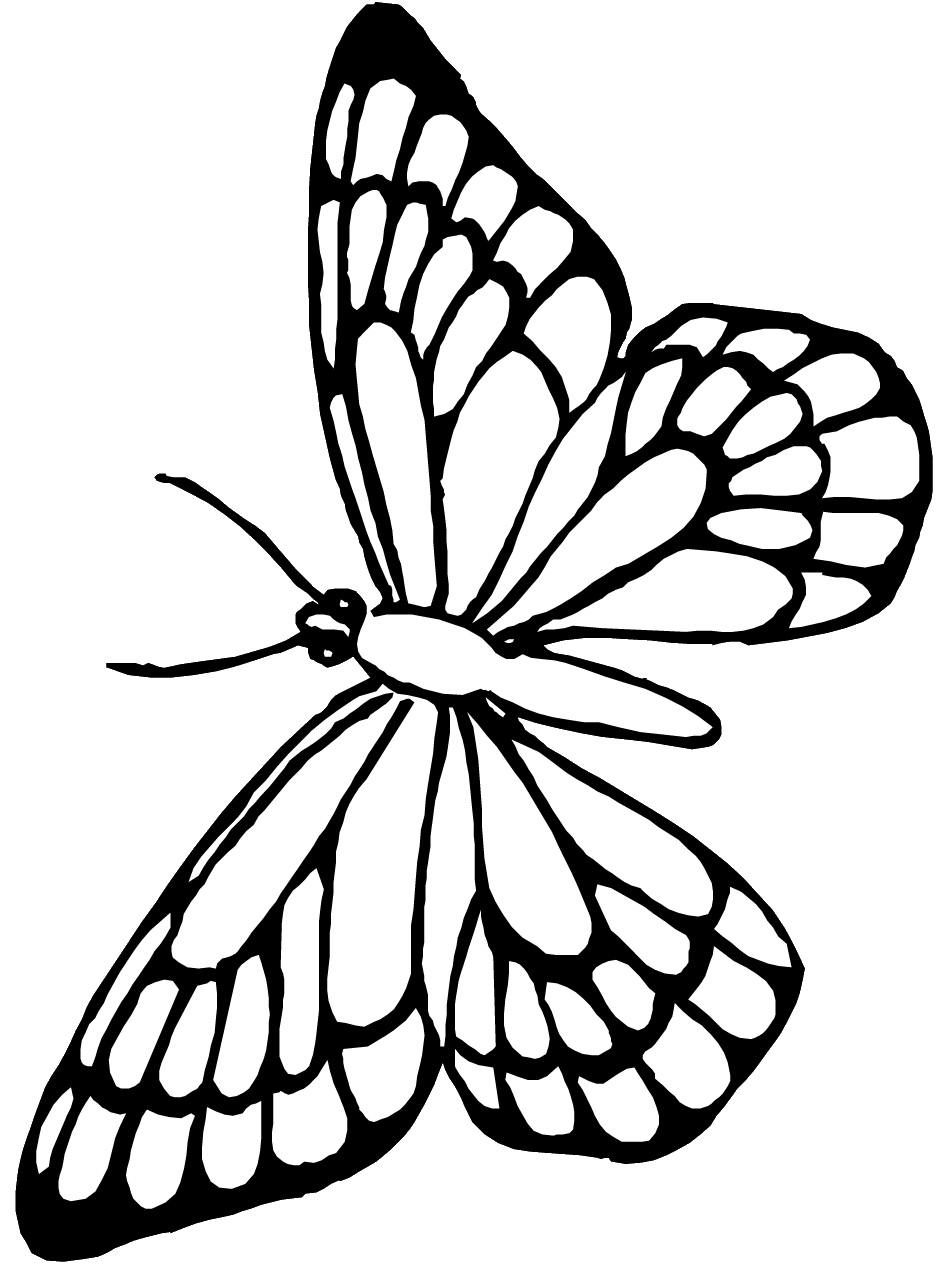 printable butterfly coloring page butterfly coloring pages for kids 100 images print for free printable butterfly coloring page