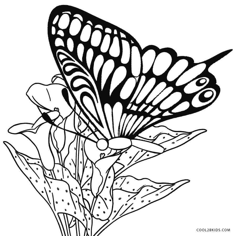 printable butterfly coloring page printable butterfly coloring pages for kids cool2bkids coloring page butterfly printable