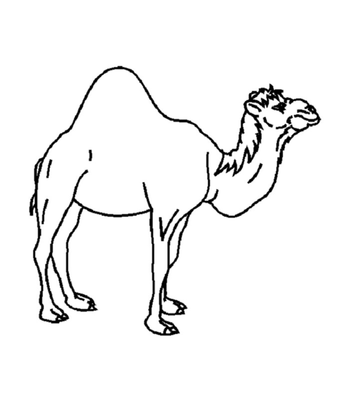 printable camel free printable camel coloring pages for kids camel printable
