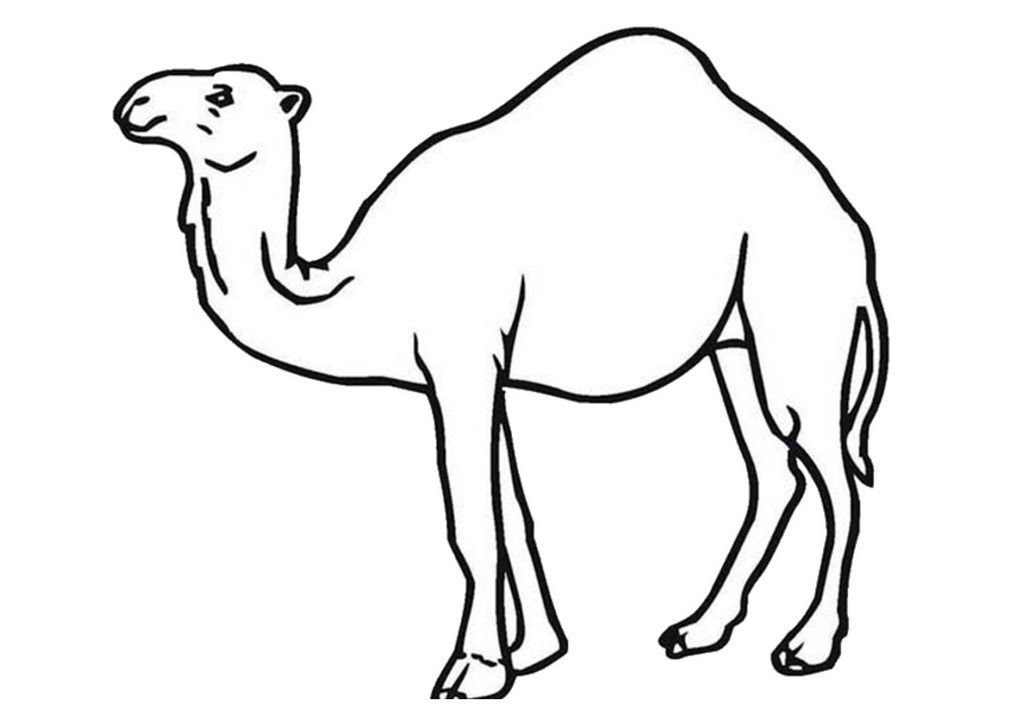 printable camel free printable camel coloring pages for kids printable camel