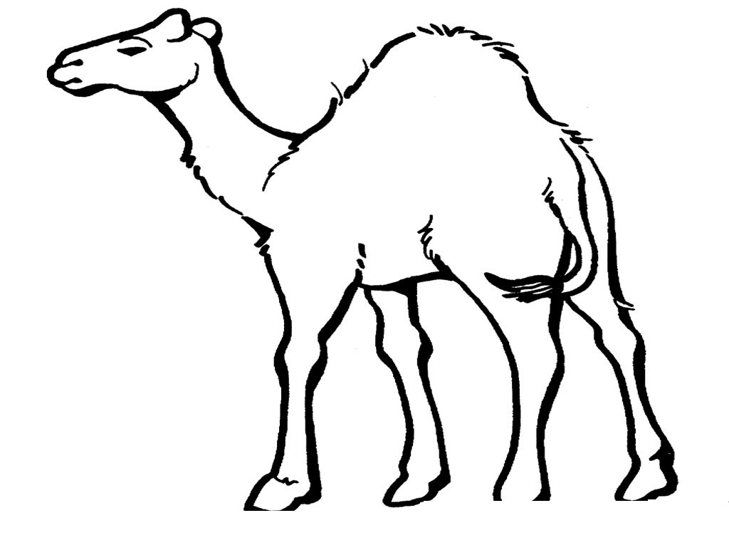 printable camel new camel coloring pages to print top free printable printable camel