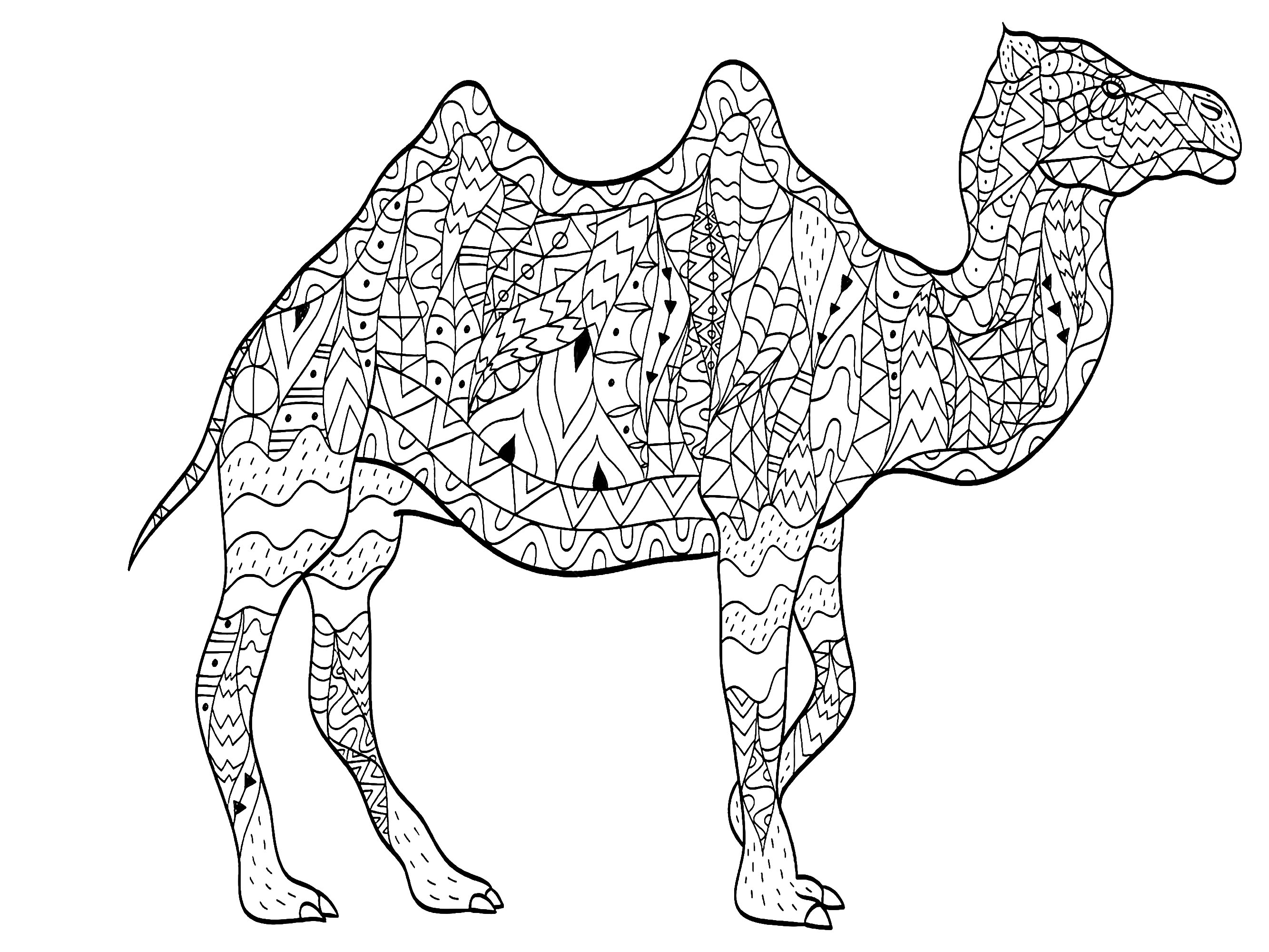 printable camel picture of a camel coloring home camel printable