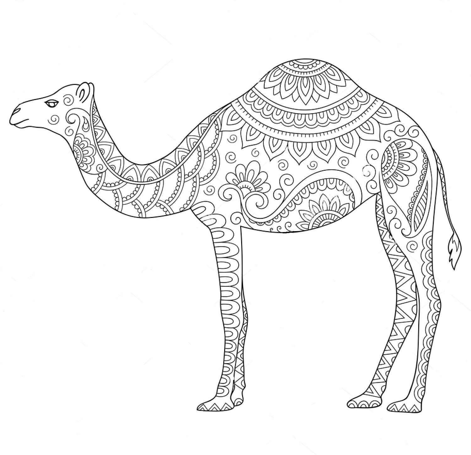 printable camel printable camel coloring pages for adult realistic printable camel