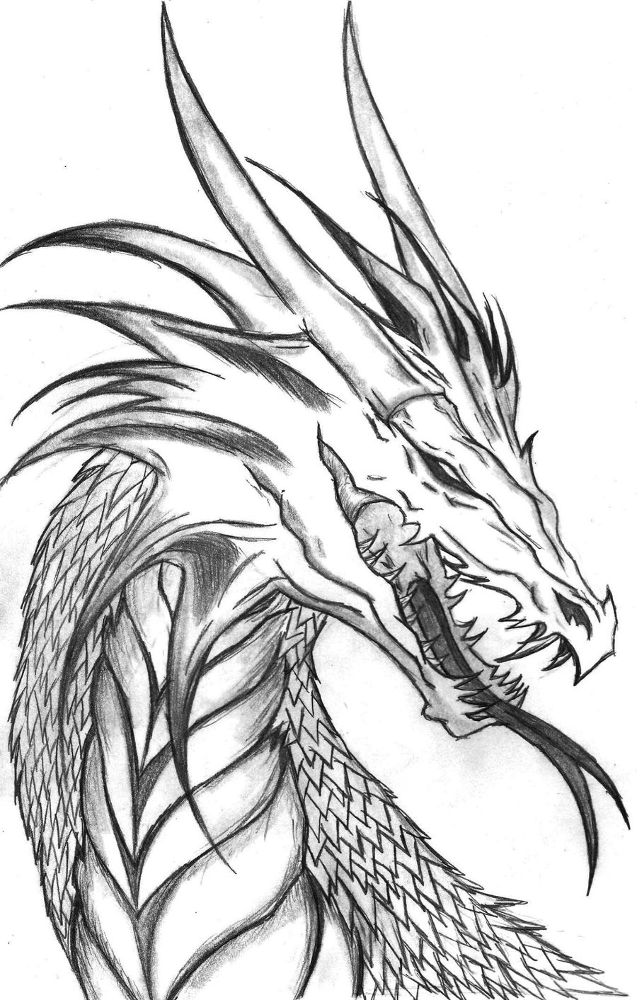 printable dragon pictures giant dragon dragons adult coloring pages dragon printable pictures