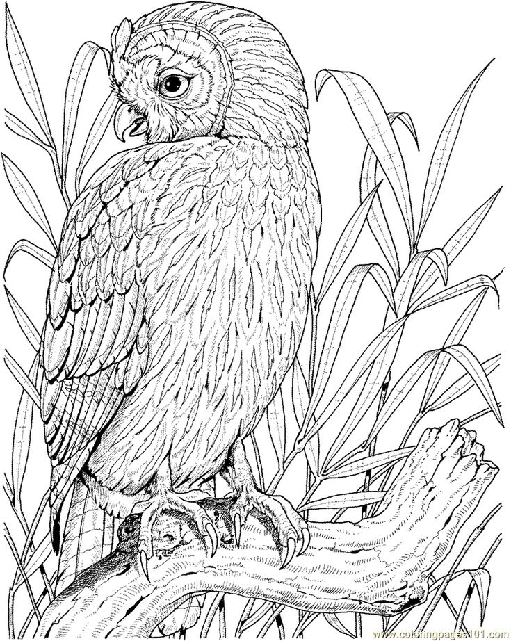 printable owl 255 best owl coloring pages for adults images on pinterest printable owl