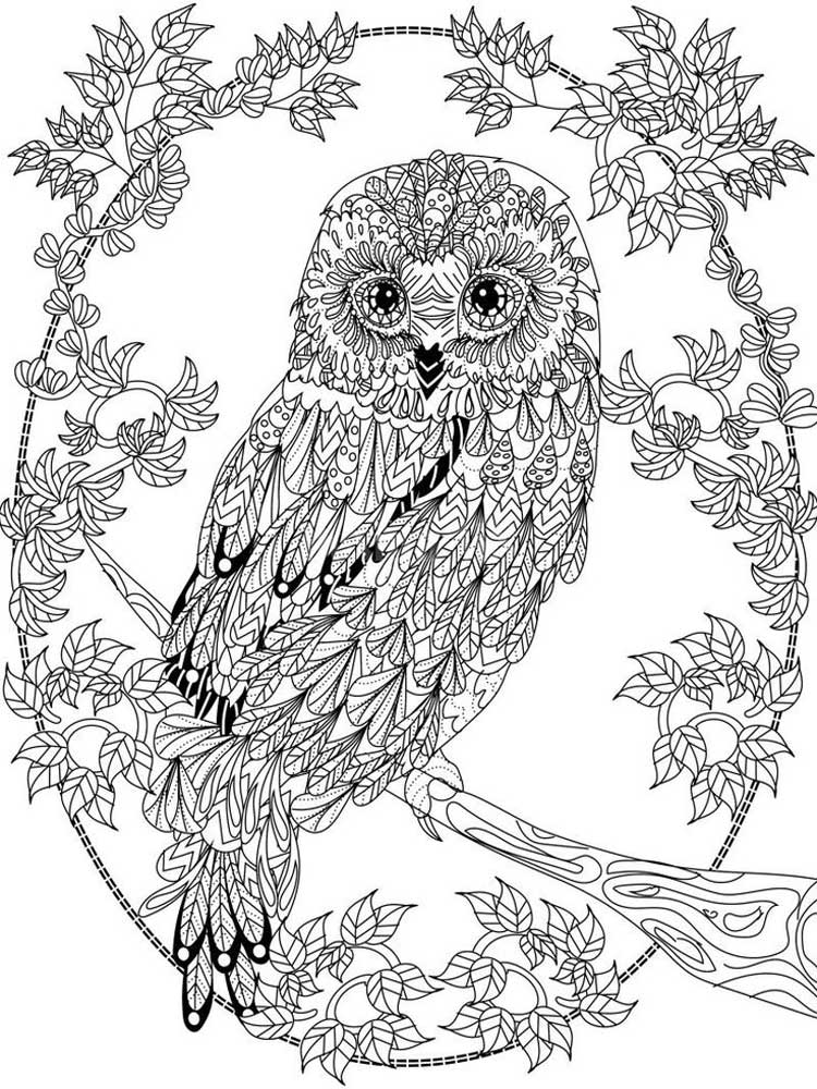 printable owl owl coloring pages for adults free detailed owl coloring printable owl