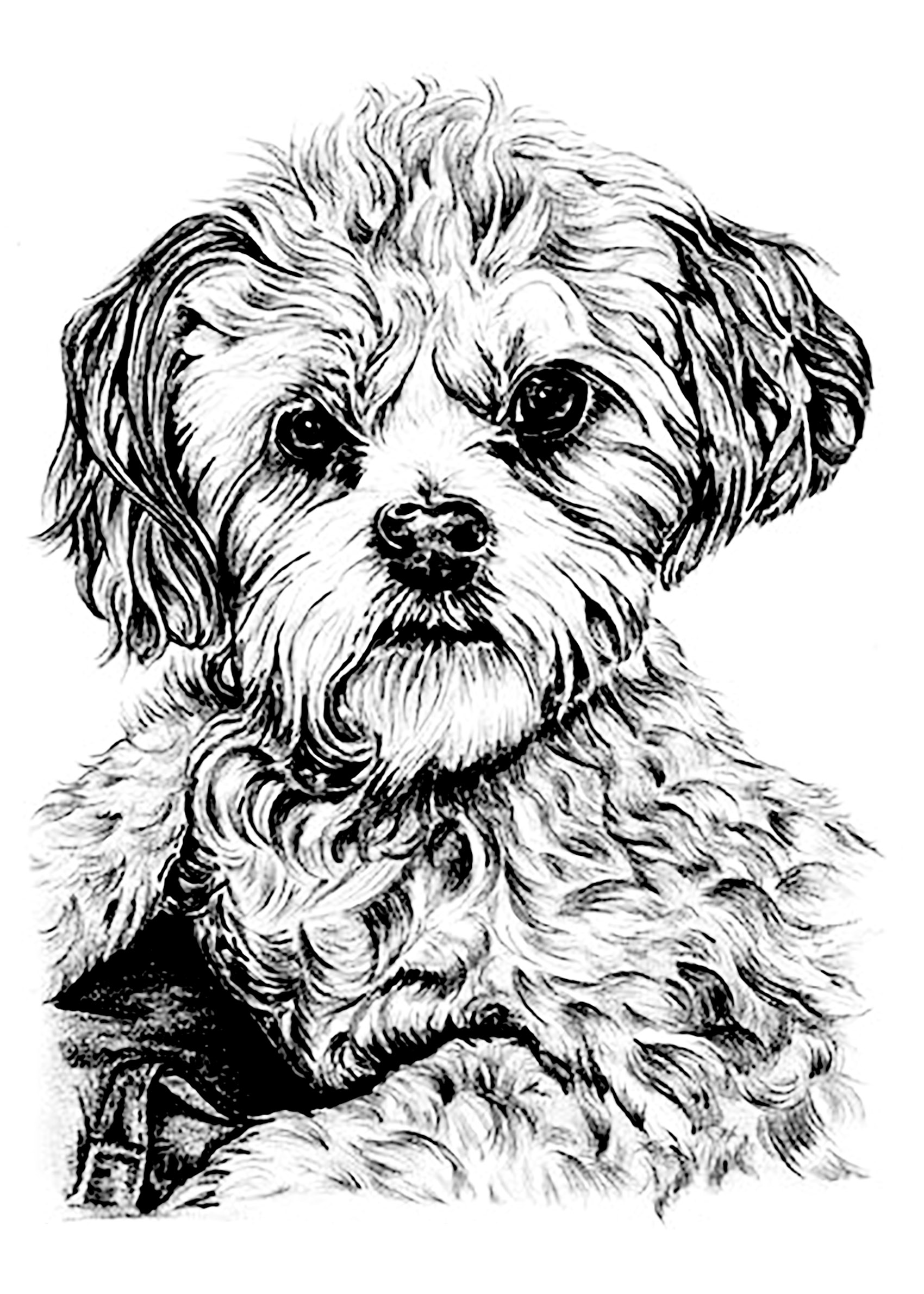 Printable picture of a dog